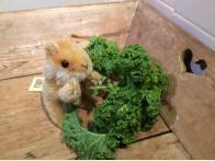 Steiff Hamster Goldy