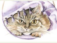 Floris Poes onder deken