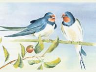 Floris Twee Zwaluwen op tak