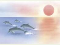 Floris Dolfijnen